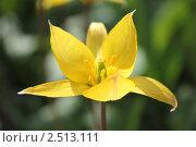 Желтый цветок. Стоковое фото, фотограф Лозовая Татьяна / Фотобанк Лори