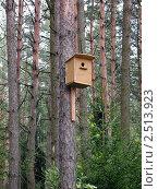 Скворечник на сосне на фоне соснового леса. Стоковое фото, фотограф UladzimiR / Фотобанк Лори