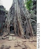 Кхмерский храм Та Пром в храмовом комплексе Ангкор Ват, Камбоджа (2011 год). Стоковое фото, фотограф Виктор Застольский / Фотобанк Лори
