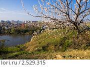 Купить «Цветущее дерево на фоне реки и города», фото № 2529315, снято 1 мая 2011 г. (c) Борис Панасюк / Фотобанк Лори