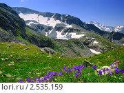 Купить «Фиолетовые цветы на фоне горного озера. Кавказские горы», фото № 2535159, снято 30 июля 2010 г. (c) Андрей Сокол / Фотобанк Лори