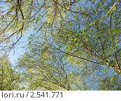 Купить «Весна», эксклюзивное фото № 2541771, снято 14 мая 2011 г. (c) Михаил Карташов / Фотобанк Лори