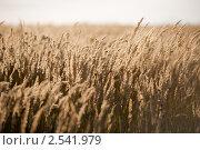 Сухая осенняя трава. Стоковое фото, фотограф Минаев С.Г. / Фотобанк Лори