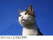 Купить «Кот на фоне синего неба», фото № 2542895, снято 24 февраля 2018 г. (c) Александр Лебедев / Фотобанк Лори