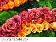 Купить «Розы на зеленом фоне», фото № 2544867, снято 11 сентября 2010 г. (c) Elnur / Фотобанк Лори
