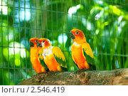 Купить «Красочные попугаи на ветке», фото № 2546419, снято 13 сентября 2010 г. (c) Elnur / Фотобанк Лори