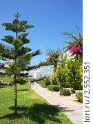 Купить «Вид из отеля в Греции, хвойные деревья, остров Крит», фото № 2552351, снято 8 сентября 2010 г. (c) ElenArt / Фотобанк Лори