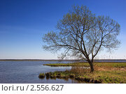 Дерево на берегу озера. Стоковое фото, фотограф Dmitry S. Marshavin / Фотобанк Лори