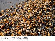 Галечный пляж. Стоковое фото, фотограф Яна Леденева / Фотобанк Лори