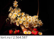 Купить «Натюрморт с ромашками и клубникой», фото № 2564587, снято 30 мая 2011 г. (c) Дорощенко Элла / Фотобанк Лори