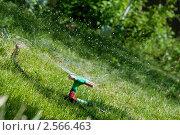 Полив газона. Стоковое фото, фотограф Иван Коцкий / Фотобанк Лори