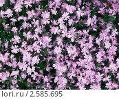 Купить «Фон из сиреневых цветов», эксклюзивное фото № 2585695, снято 29 мая 2011 г. (c) Михаил Карташов / Фотобанк Лори