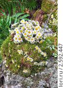 Купить «Фестиваль флористики «Цветень», композиция из ромашек на фоне природы», фото № 2592447, снято 4 июля 2010 г. (c) ElenArt / Фотобанк Лори