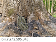 У подножия огромного дуба. Стоковое фото, фотограф Игорь Митов / Фотобанк Лори
