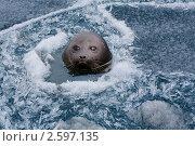 Купить «Байкал. Нерпа», фото № 2597135, снято 4 июня 2006 г. (c) Вадим Морозов / Фотобанк Лори