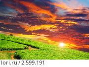 Купить «Плантация чая на закате, Уганда», фото № 2599191, снято 30 августа 2010 г. (c) Знаменский Олег / Фотобанк Лори