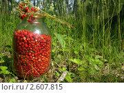 Купить «Дары леса», фото № 2607815, снято 18 июня 2011 г. (c) Natalya Sidorova / Фотобанк Лори