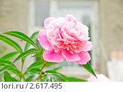Цветок в саду. Стоковое фото, фотограф Сергей Жинко / Фотобанк Лори