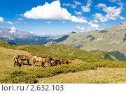 Купить «Горный пейзаж с пасущимися лошадьми», фото № 2632103, снято 30 августа 2009 г. (c) Dmitry Burlakov / Фотобанк Лори