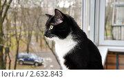 Кошка у окна. Стоковое фото, фотограф Евгений Филиппович / Фотобанк Лори