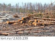 Купить «Вырубка леса после пожара», эксклюзивное фото № 2633239, снято 19 июня 2011 г. (c) Макарова Елена / Фотобанк Лори
