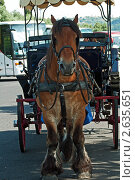 Португалия. Прогулка на лошади по городу. Стоковое фото, фотограф Vasilii Olii / Фотобанк Лори