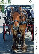 Лошадь, запряженная в телегу. Стоковое фото, фотограф Vasilii Olii / Фотобанк Лори