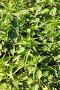 Кусты крапивы крупным планом, фото № 2636995, снято 2 июля 2011 г. (c) Николай Винокуров / Фотобанк Лори