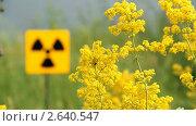 Купить «Поле желтой травы и знак радиации», видеоролик № 2640547, снято 6 июля 2011 г. (c) Юрий Пономарёв / Фотобанк Лори