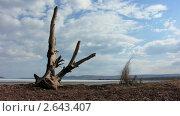 Купить «Высохшее дерево на берегу озера», видеоролик № 2643407, снято 23 мая 2010 г. (c) Юрий Пономарёв / Фотобанк Лори