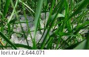 Купить «Талый снег на траве», видеоролик № 2644071, снято 11 мая 2011 г. (c) Михаил Коханчиков / Фотобанк Лори