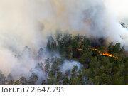 Купить «Горящий лес, вид с самолета», фото № 2647791, снято 27 июня 2011 г. (c) Владимир Мельников / Фотобанк Лори