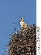 Купить «Белый аист в гнезде», фото № 2648963, снято 9 июля 2011 г. (c) Николай Шуманский / Фотобанк Лори