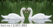 Купить «Два лебедя», фото № 2651983, снято 7 июля 2011 г. (c) Андрей Павлов / Фотобанк Лори