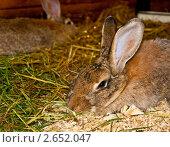 Солнечный кролик. Стоковое фото, фотограф Елена Бабаина / Фотобанк Лори