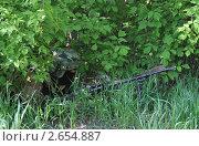 Купить «Замаскированный пулемётчик», эксклюзивное фото № 2654887, снято 25 мая 2011 г. (c) Free Wind / Фотобанк Лори