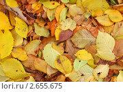 Купить «Осенняя листва», фото № 2655675, снято 16 октября 2010 г. (c) Иван Михайлов / Фотобанк Лори