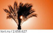 Купить «Пальма в контровом свете», видеоролик № 2658627, снято 16 декабря 2010 г. (c) Михаил Коханчиков / Фотобанк Лори