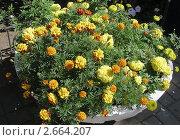 Цветы в каменной вазе. Стоковое фото, фотограф Кашкарева Светлана / Фотобанк Лори