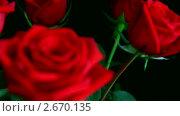 Купить «Красная роза», видеоролик № 2670135, снято 14 марта 2011 г. (c) Михаил Коханчиков / Фотобанк Лори