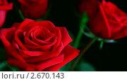 Купить «Красная роза», видеоролик № 2670143, снято 14 марта 2011 г. (c) Михаил Коханчиков / Фотобанк Лори