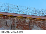 Колючая проволока. Стоковое фото, фотограф Сергей Матвеев / Фотобанк Лори