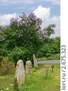 Купить «Каменные бабы под цветущим кустом сирени», фото № 2675323, снято 14 мая 2011 г. (c) Борис Панасюк / Фотобанк Лори