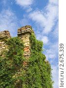Купить «Фрагмент каменной башни, увитой диким виноградом», фото № 2675339, снято 14 мая 2011 г. (c) Борис Панасюк / Фотобанк Лори