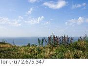Купить «Степная растительность на фоне Азовского моря», фото № 2675347, снято 1 июля 2011 г. (c) Борис Панасюк / Фотобанк Лори