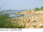 Купить «Стебли травы на фоне каменистого пляжа», фото № 2675359, снято 1 июля 2011 г. (c) Борис Панасюк / Фотобанк Лори