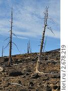 Купить «Погибшие деревья на склоне сопки», фото № 2678219, снято 15 мая 2011 г. (c) Валерий Александрович / Фотобанк Лори