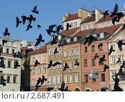 Голуби на площади (2008 год). Стоковое фото, фотограф Григорьева Полина / Фотобанк Лори