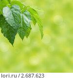 Купить «Зеленый фон с весенней листвой», фото № 2687623, снято 31 января 2019 г. (c) Наталья Двухимённая / Фотобанк Лори