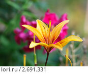 Купить «Цветок лилии в саду», фото № 2691331, снято 31 июля 2011 г. (c) Владимир Борисов / Фотобанк Лори